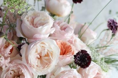 «Кіра» є прекрасним прикладом того, як троянда може змусити посміхнутися і заворожити своєю красою без зусиль