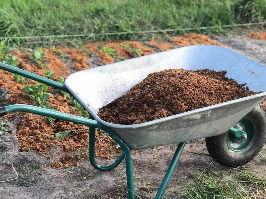 Яку мульчу я використовую і чому без мульчування не уявляю свій сад і город