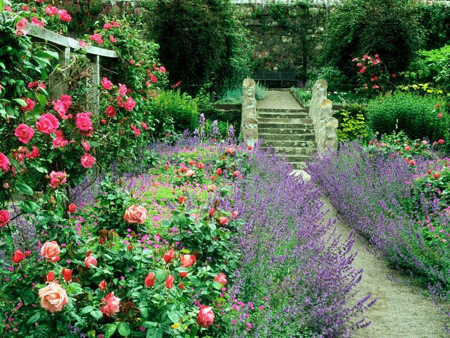 Основа англійських квітників - багаторічники і, звичайно ж, троянди