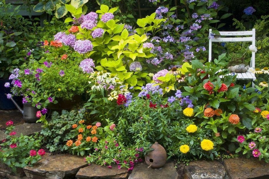 Щоб англійський квітник заграв на повну, потрібен час і терпіння