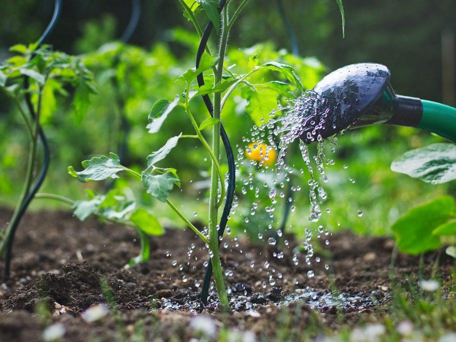 Усі народні й біорецепти для підживлення томатів можна застосовувати і разом з мінеральними добривами