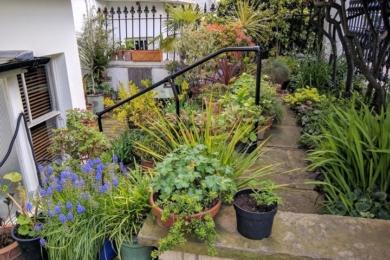 """Переможець в номінації """"Передній сад""""(Front garden) — Мерілін Куснер, Лондон"""
