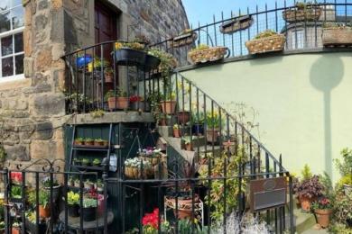 Переможець в категорії «Альтернативний сад» — Аманда Адамсон, Единбург