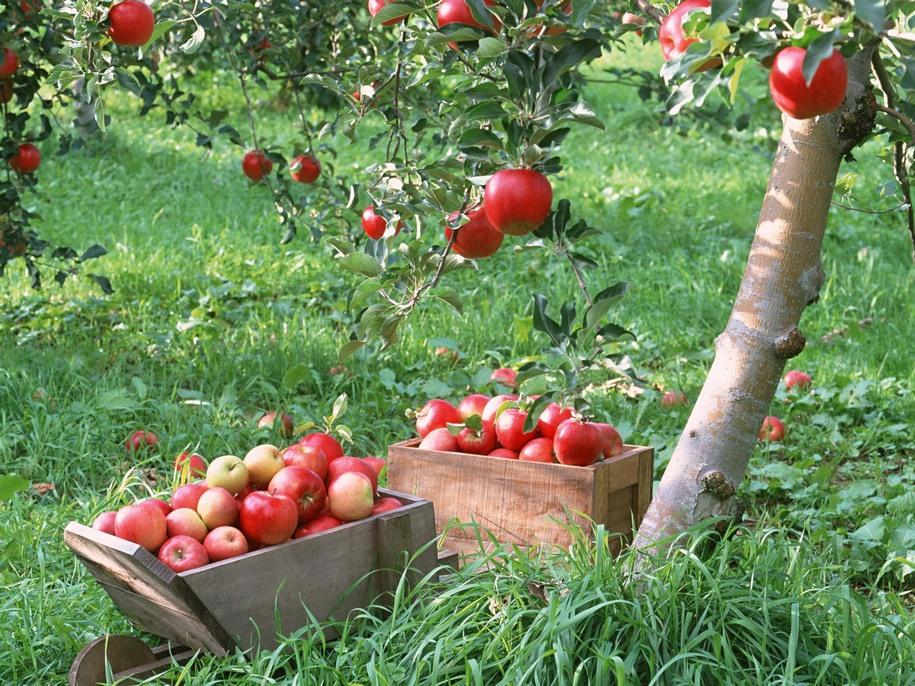 Посівний календар на серпень 2021 городника і садівника