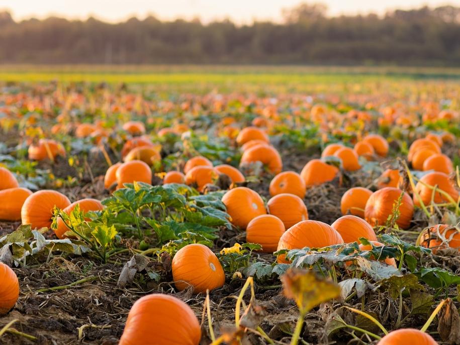 Посівний календар на вересень 2021 городника і садівника