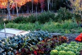 Що посіяти на осінь, щоб бути з урожаєм до морозів?