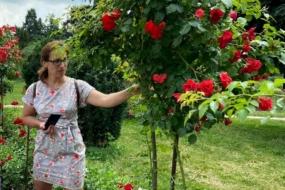 Штамбова троянда своїми руками — теорія питання