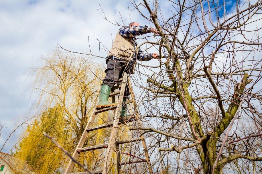 Обрізка дерев для початківців — види і терміни, схеми і фото