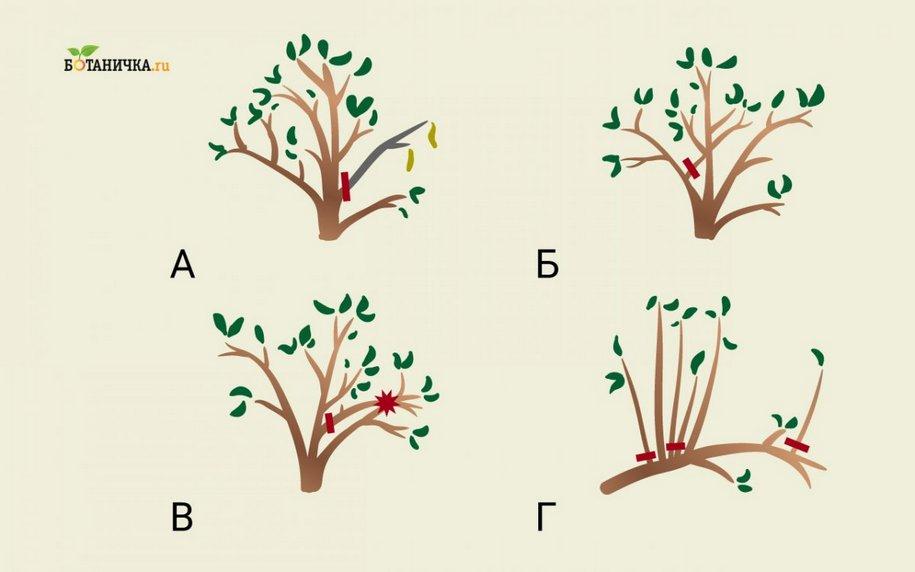 Санітарна обрізка для всіх дерев - це чищення від усього зайвого, пошкодженого та непотрібного