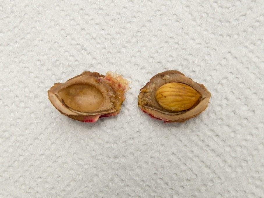 Кісточка і насіння персика